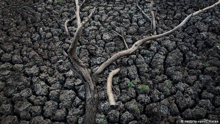 Dried-out creekbed and bare tree branches (Getty Images/L. Maree)