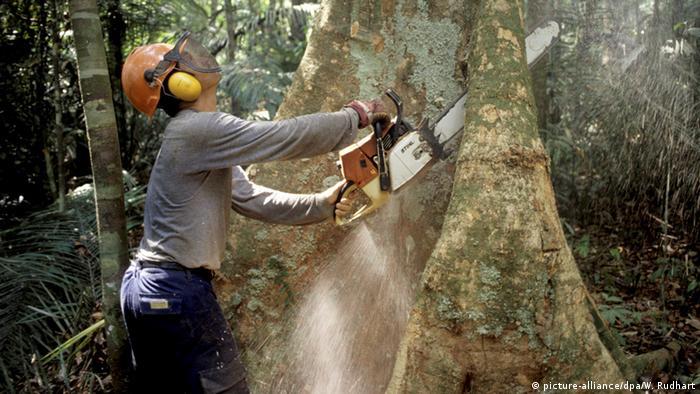 Brasilien Entwaldung des Urwaldes