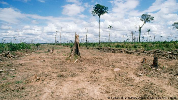 Brazil deforestation of the jungle (picture-alliance / Mary Evans Picture Library / N. Gordon)