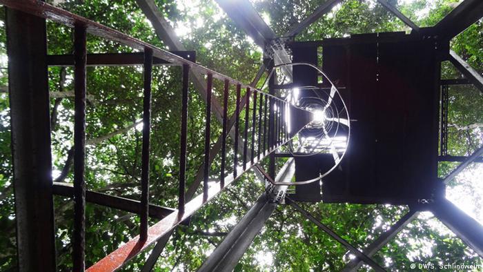 Cientistas analisam ovos que mosquitos depositados no alto de uma torre