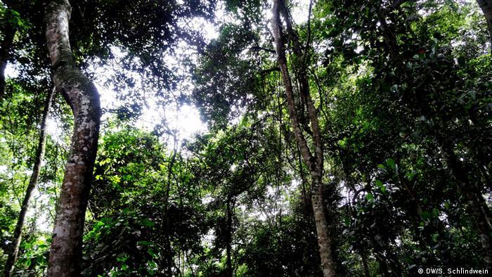 Floresta de Zika, em Uganda