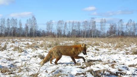 Ukraine Tiere in Tschernobyl