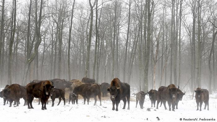 Тварини в Чорнобильській зоні