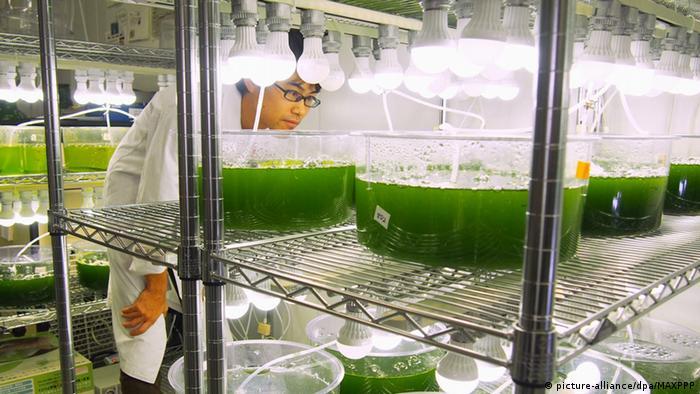 Empresa de pesquisa de biocombustíveis no Japão
