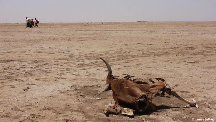 Tierkadaver auf ausgetrocknetem Boden (Foto: DW/J. Jeffrey)