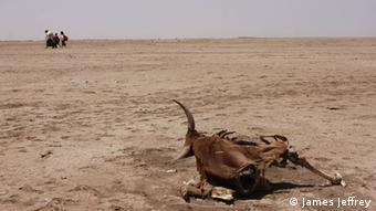 Selon les diplomates européens, la situation en Éthiopie est catastrophique... ce qui n'empêche pas de proposer à Addis Abeba de coopérer sur le retour des migrants