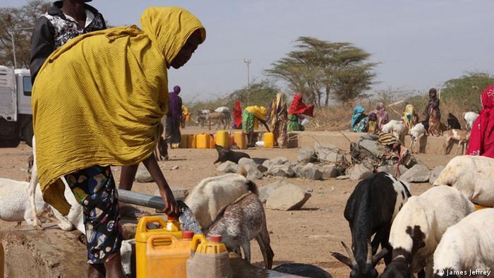 Eine Frau holt Wasser in Äthiopien, ein paar Ziegen versuchen einen Schuck zu ergattern (Foto: DW/J. Jeffrey)