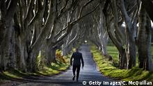 29.04.2015 BALLYMONEY, NORTHERN IRELAND - APRIL 29: Democratic Unionist Party Westminster candidate Ian Paisley Jr walks along the Dark Hedges whilst out canvassing on April 29, 2015 in Ballymoney, Northern Ireland. Son of the late Ian Paisley, founder of the DUP and former Northern Ireland First Minister, Paisley Jr successfully ran to succeed his father as the Westminster MP for North Antrim in the 2010 UK general election, winning 46.4% of the vote share. Political observers have suggested that the DUP, with a probable 8-10 Westminster seats could have an influential role to play if the General Election results in a hung parliment. The DUP has said that they are open to working with either the Conservatives or the Labour party. (Photo by Charles McQuillan/Getty Images) Copyright: Getty Images/C. McQuillan