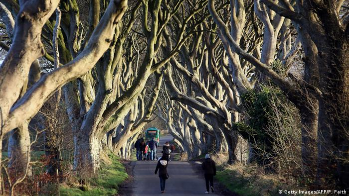 Irland Dark Hedges