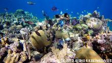 Korallen Riff Roatan