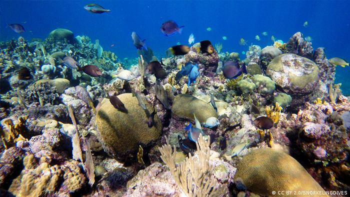 A coral reef teeming with fish in Roatan (CC BY 2.0/SNORKELINGDIVES)