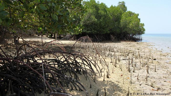 Hutan Mangrove di Bali (CC BY 2.0/Ron from Nieuwegein)