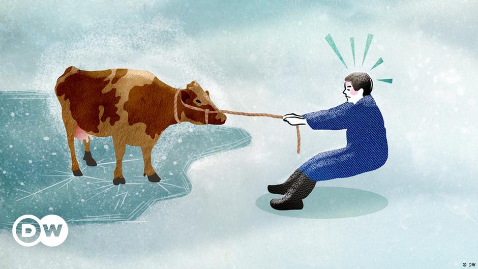 Die Kuh vom Eis holen