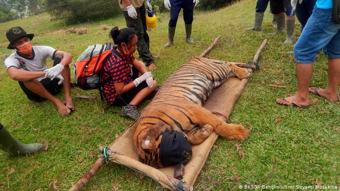 Harimau Dan Manusia Dalam Fiksi Kita Indonesia Laporan Topik Topik Yang Menjadi Berita Utama Dw 04 07 2017
