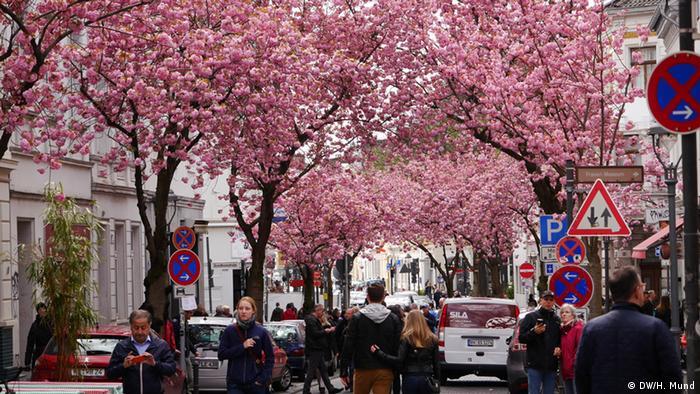 Deutschland Kirschblüten-Hype in Bonn