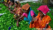 Teeindustrie Bangladesch