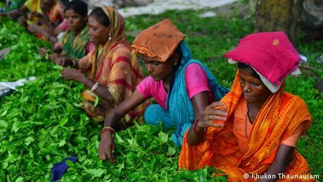 Teeindustrie Bangladesch (Khukon Thaunaujam)