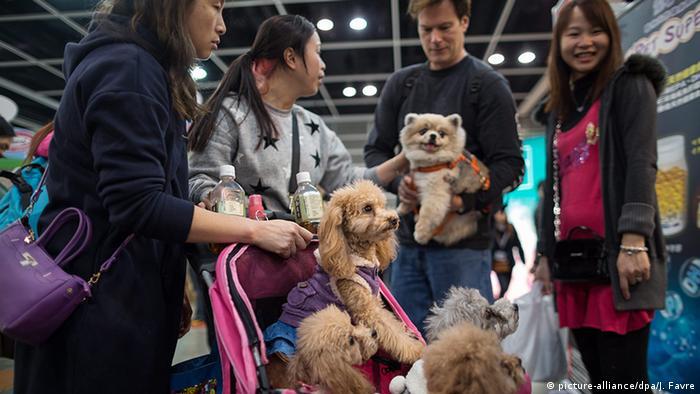 Desfile de cães em Hong Kong