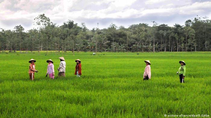 Reisernte Frauen und Männer arbeiten im Reisfeld Java Indonesien