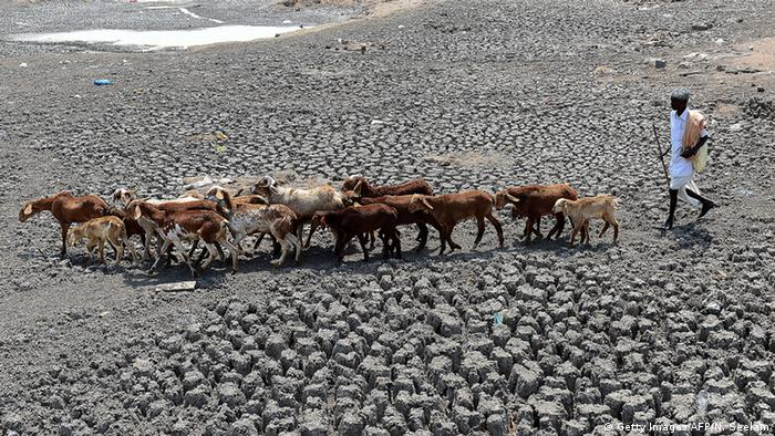 An Indian farmer herds his sheep on the dry bed of a river in Nalgonda District, some 40 kilometers from Hyderabad