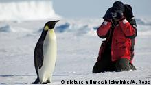 Weddell Sea Kaiserpinguin im antarktischen Eis