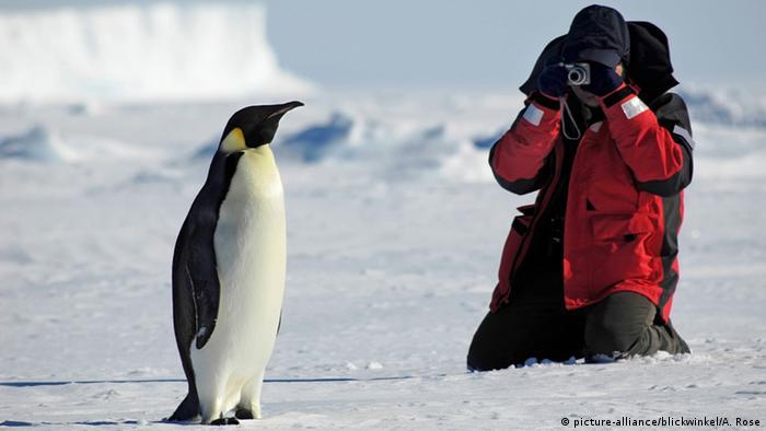 Человек фотографирует королевского пингвина в Антарктиде