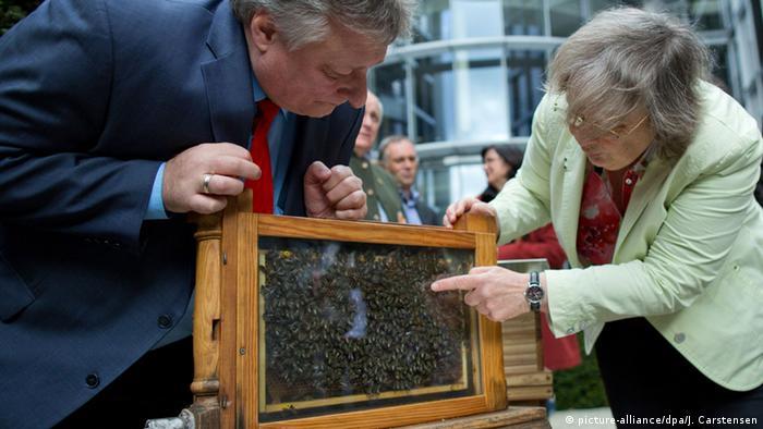 Der neue Bienenstock für den Bundestag wird von Grünen-Politikerin Bärbel Höhn (r) und SPD-Politiker Martin Burkert vor gestellt (Foto: dpa)