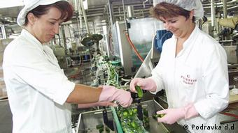 Žene pakiraju krastavce