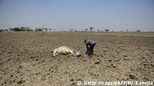 Indien Allahabad Trockenheit Wassermangel Rinder,