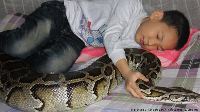 China Junge mit Python