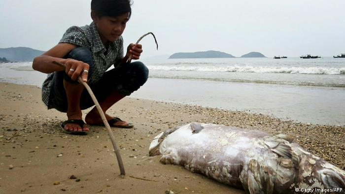 Ein Vietnamese begutachtet einen toten Fisch am Strand (Foto: STR/AFP/Getty Images)