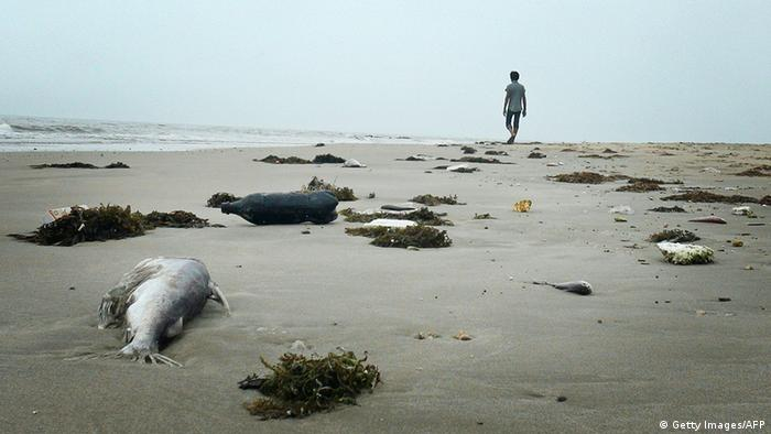 A man walking among dead fish lying on a beach in Quang Trach district in the central coastal province of Quang Binh (Photo: STR/AFP/Getty Images)
