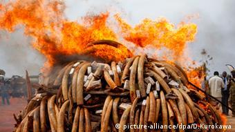 Elfenbeinverbrennung in Kenia