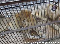 Часто тварини гинуть у цирках