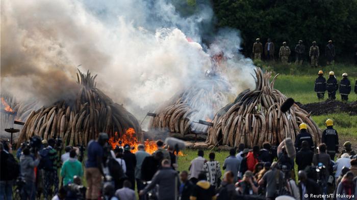 Verbrennung von Elfenbein in Kenia (Foto: Reuters/T. Mukoya)