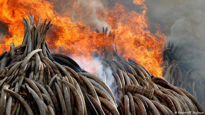 Fire burns elephant tusks and rhino horns confiscated by smugglers