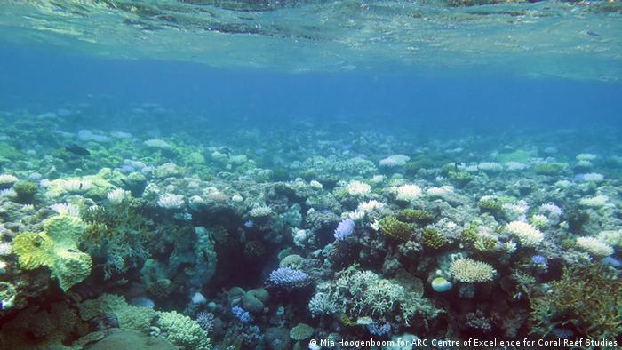 Great Barrier Reef Korallenriff (Mia Hoogenboom for ARC Centre of Excellence for Coral Reef Studies)