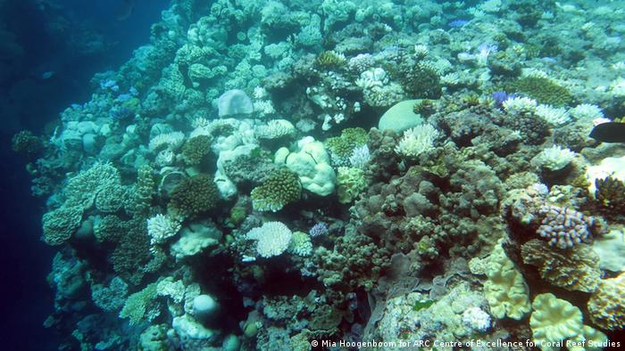Underwater picture of corals in the Great Barrier Reef (Photo: Mia Hoogenboom/ARC)