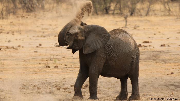 Afrika Hwange National Park Elefant während Dürrezeit (Foto: Reuters/P. Bulawayo)