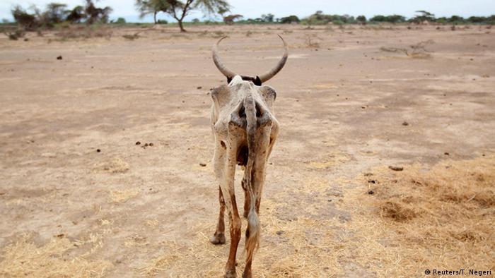 Sequía en Gelcha, en la región de Oromia, Etiopia.
