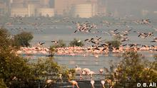 Flamingos in Bombay, Indien