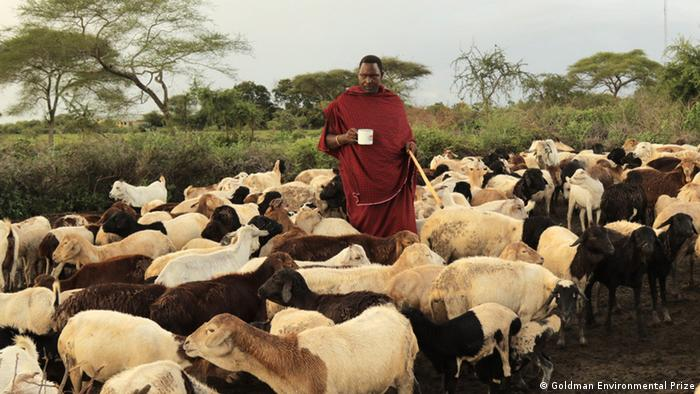 Edward Loure in the middle of a herd of sheep