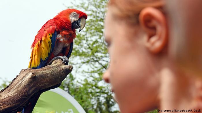 Красный ара, Карлсруэ