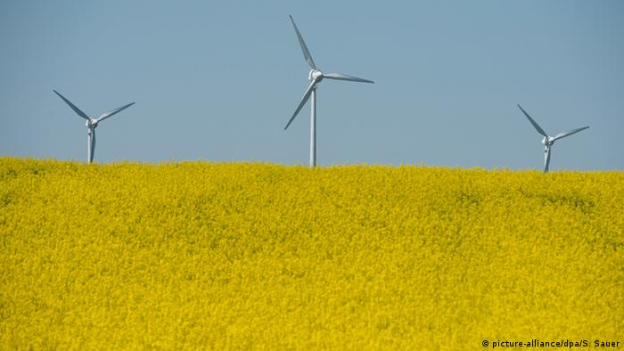 A blooming rapeseed field in front of wind power plants in Germany (Photo: picture-alliance/dpa/S. Sauer).