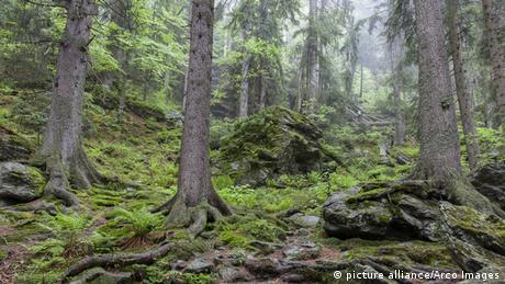 Bäume im Bayerischen Wald