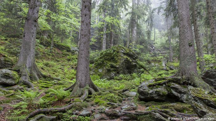 Nationalpark Bayerischer Wald (picture alliance/Arco Images)