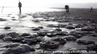 La aparición de marea roja en las regiones de Los Lagos y Los Ríos obligó a decretar alerta sanitaria y prohibir la extracción de mariscos.
