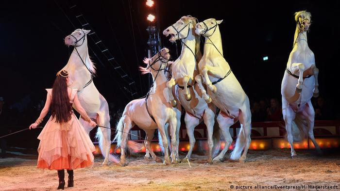 Шоу в цирке Krone