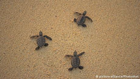 South Atlantic, turtles, Ascension Island
