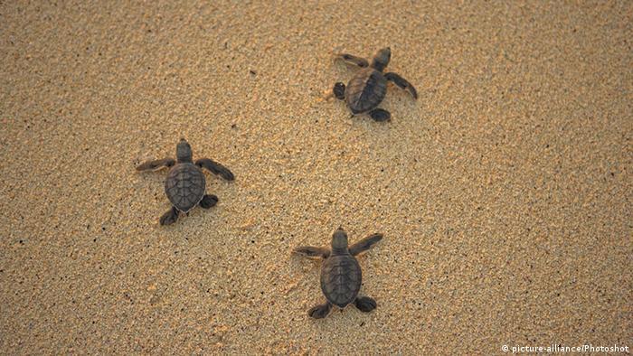 South Atlantic, turtles, Ascension Island